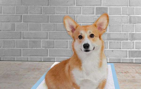 How To Use Waterproof Bottom Pet Pads