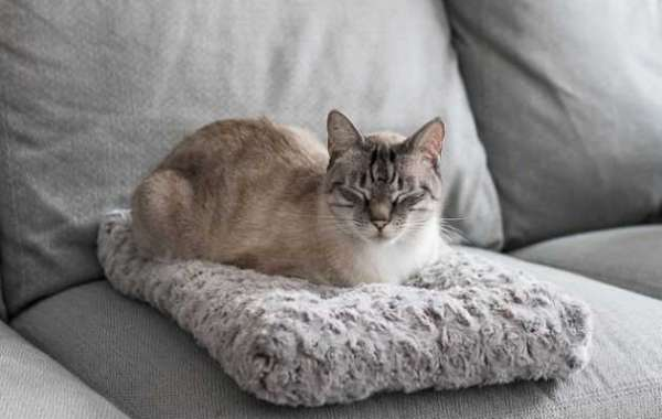 A Cat heated Bed For Every Cat