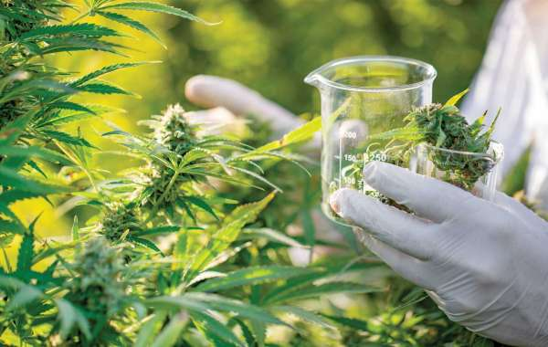 Line Organic CBD Oil UK Scam Or Not? Read Here!