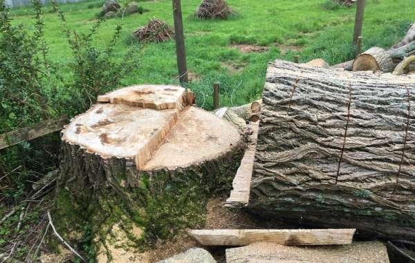 Arborist Tauranga