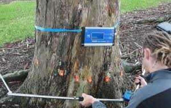 Tree Evaluation Auckland