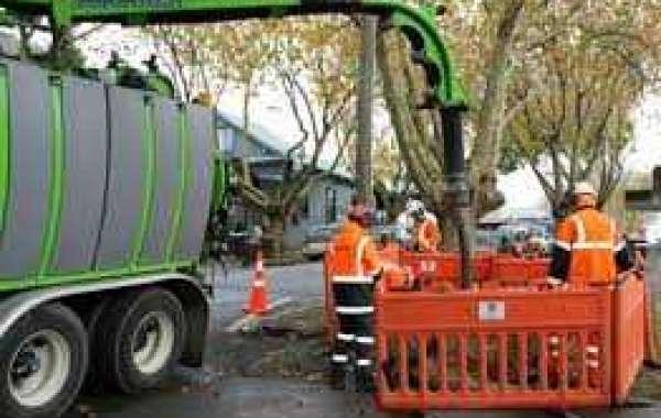 Tree Assessment Auckland
