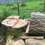 Bay Stump Grinding Profile Picture