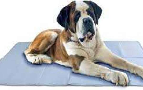 Briefly Understand The Use of Pet Cool Gel Mat